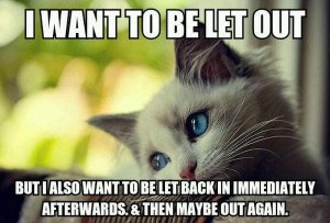 cat-humor-funny-i-want-to-be-let-out